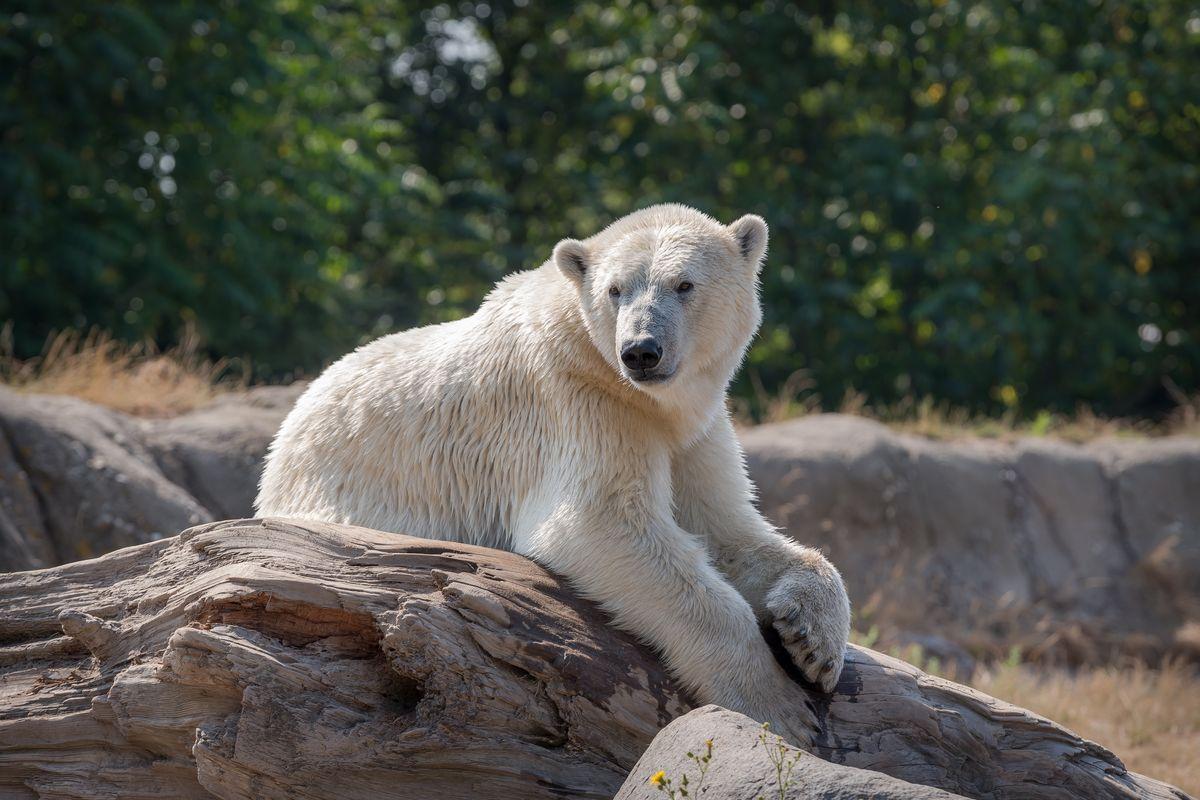 Клиент — медвежонок